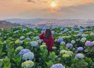 Tour du lịch nội địa 2021 nên đi những điểm đến nào?